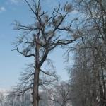 spicka-strom1.jpg.conv
