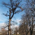 spicka-stromy.jpg.conv